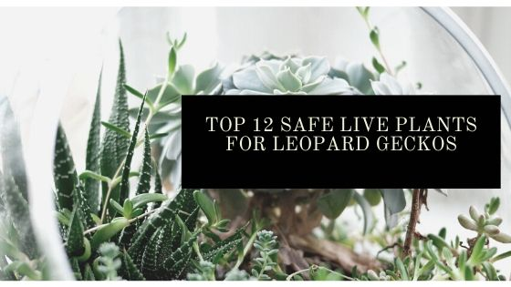 live plants for leopard geckos