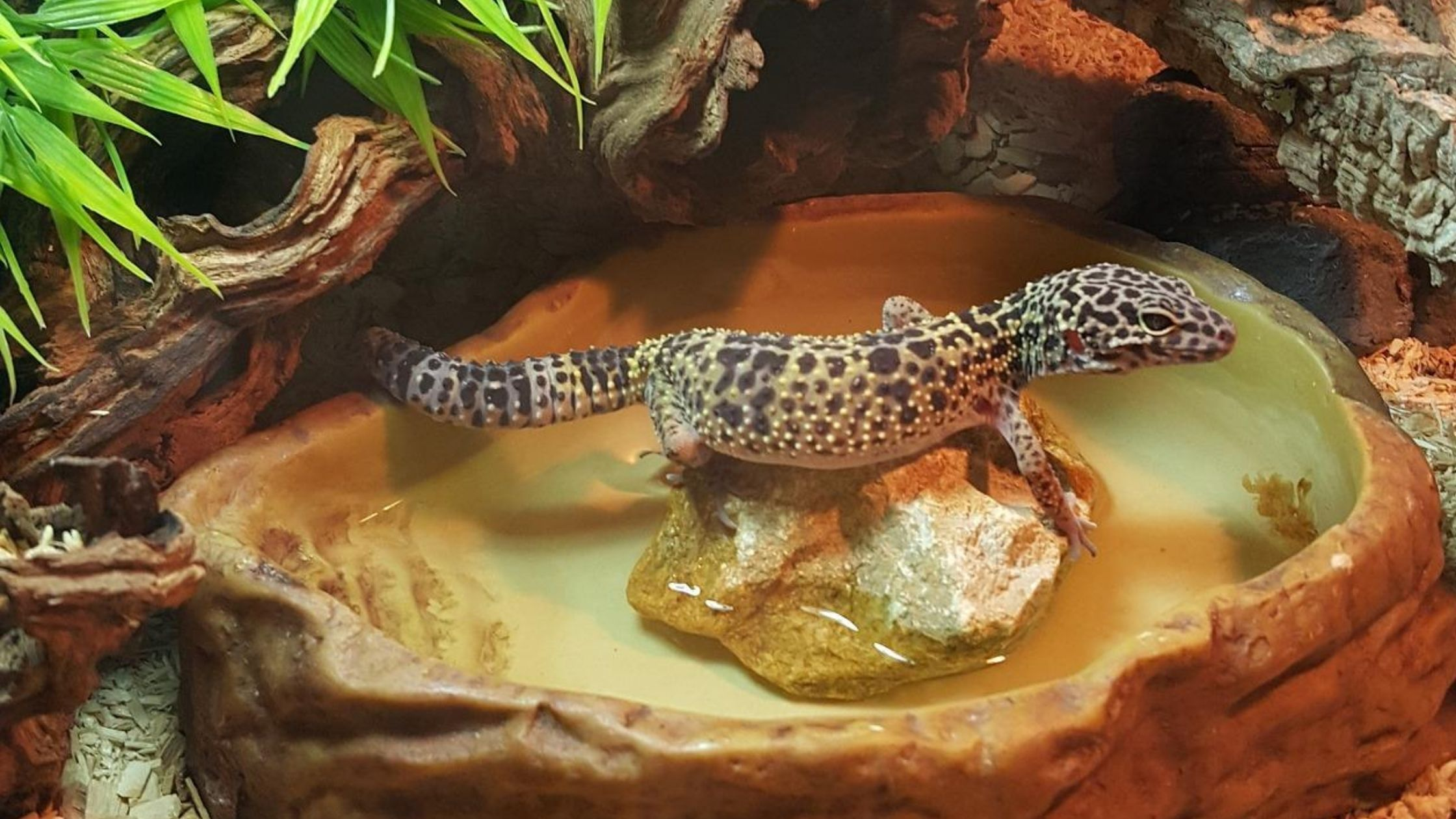 8 Best Leopard Gecko Substrates