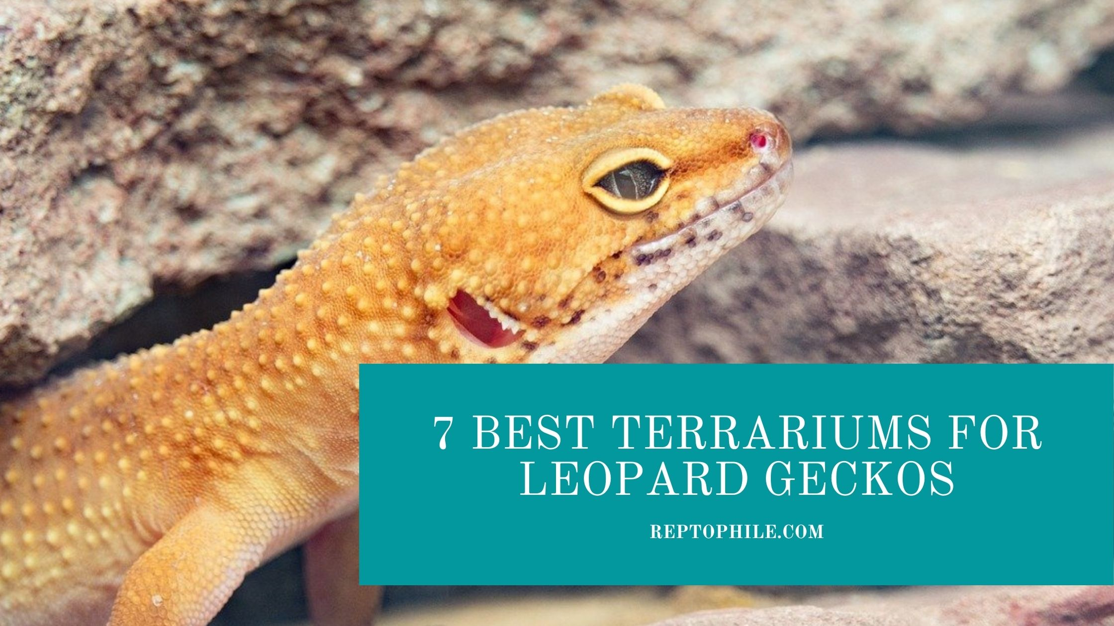 terrariums for leopard geckos