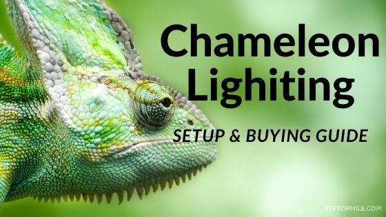 Chameleon Lighting Setup Guide