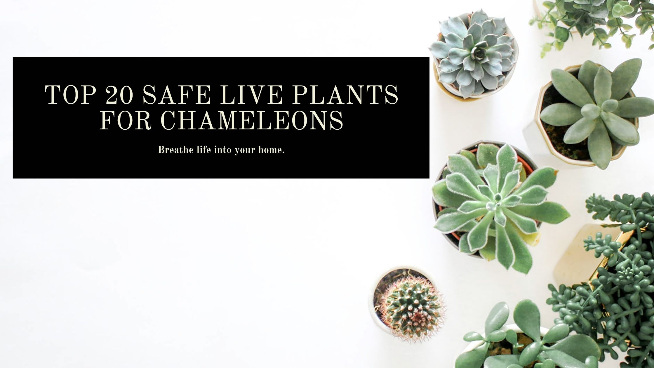 safe live plants for chameleons
