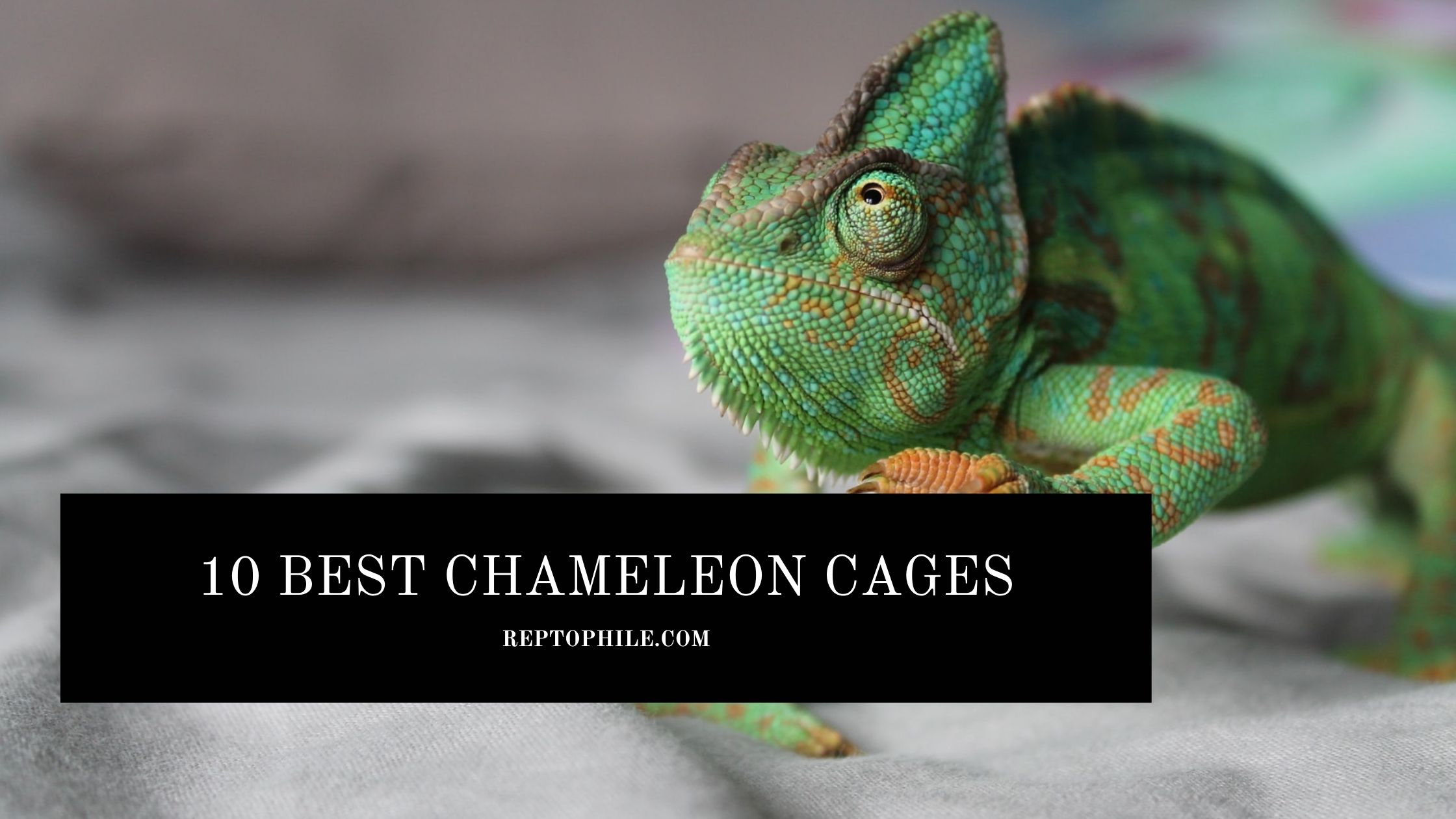 best chameleon cages